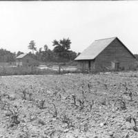 A Corn Field on a Farm, Photograph, n.d.